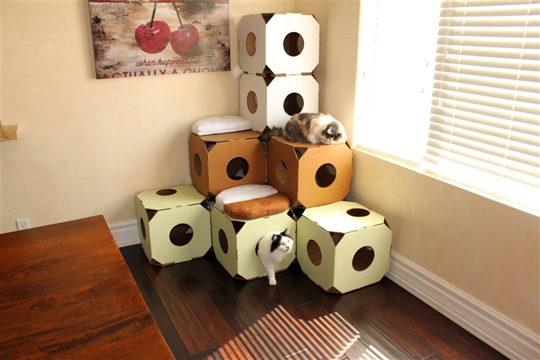 Geben your cat the perfect stimulation with these American-made boxes.
