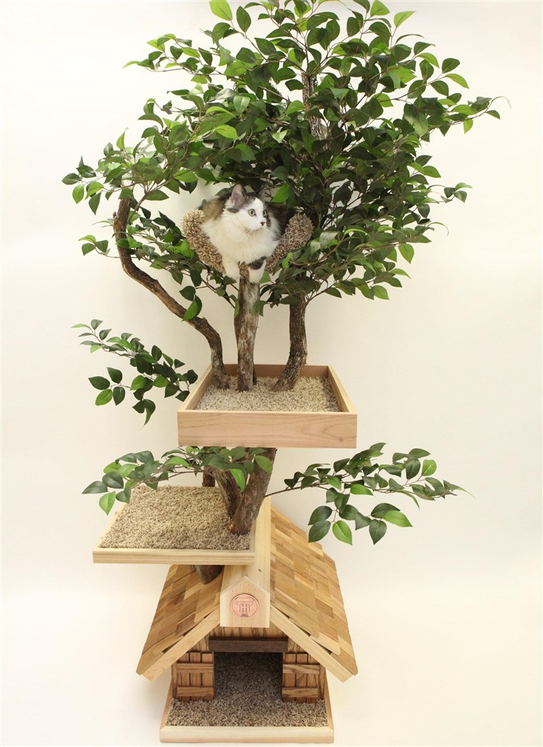 Lassen your cat explore their wild side with these trees.