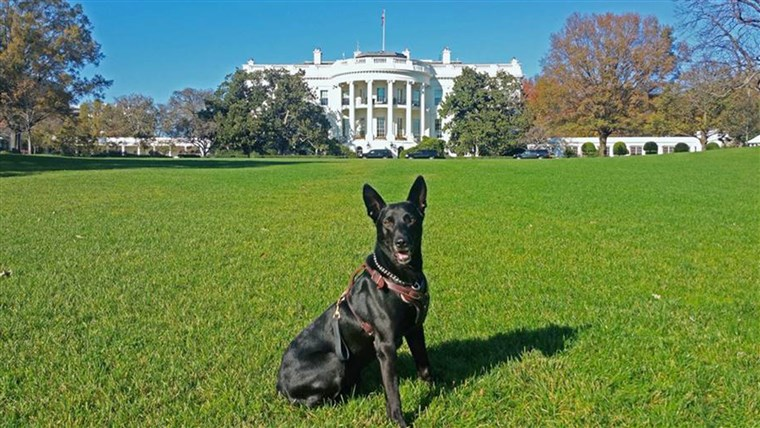 Тайна Service dog Hurricane in front of the White House