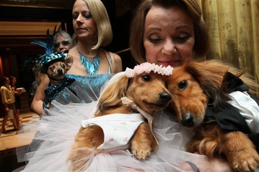 Jezevčíci dressed for the occasion, Dee Dee, foreground left, and her cousin Clifford, foreground right, are held by their owner Valerie Diker, as they and other dogs and people wait for the start of the most expensive wedding for pets Thursday July 12, 2012 in New York. The black tie fundraiser, where two dogs were